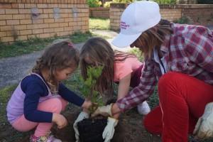 Tree Planting - Umina Beach - 1